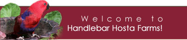 Welcome to Handlebar Hosta Farms!